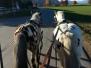 Pony-Kutschenfahrt